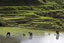 Philippines farmers