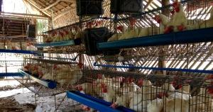 Basey Poultry Farm